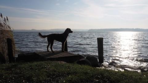 Free! (miDoggy Parade: Hund und Job – wie geht das?)