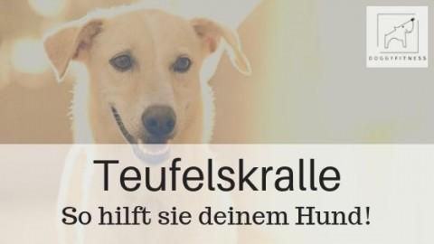Teufelskralle – so hilft sie deinem Hund bei Gelenkerkrankungen