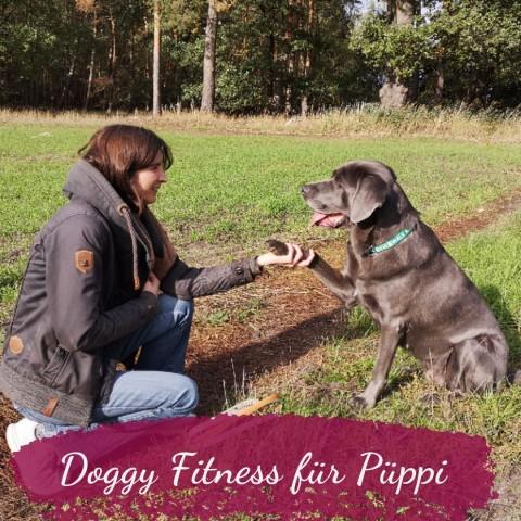Doggy Fitness Online Kurs – Die Püppi bekommt ein Fitnesstraining