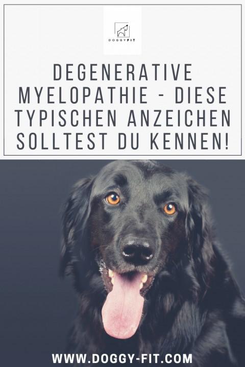 Diese Symptome der Degenerativen Myelopathie solltest du kennen!