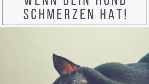 Woran erkennst du, dass dein Hund Schmerzen hat?
