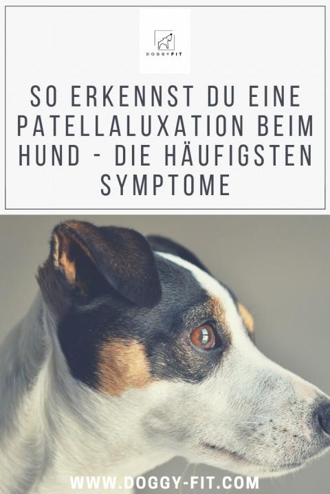 Das sind die wichtigsten Symptome der Patellaluxation beim Hund!