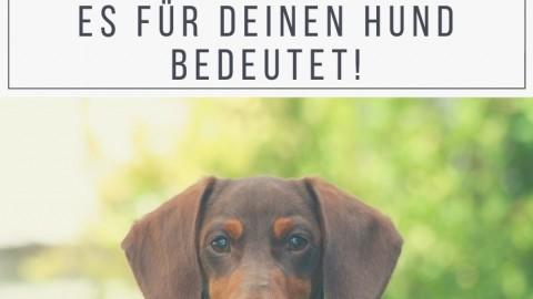 Die 4 Schweregrade der Patellaluxation – so wirkt sich die Erkrankung bei deinem Hund aus!
