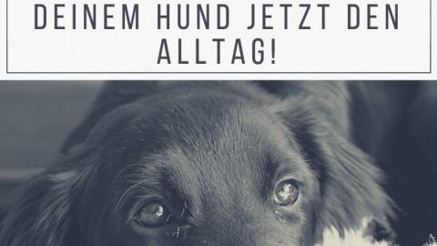 Degenerative Myelopathie – so kannst du deinen Hund unterstützen!