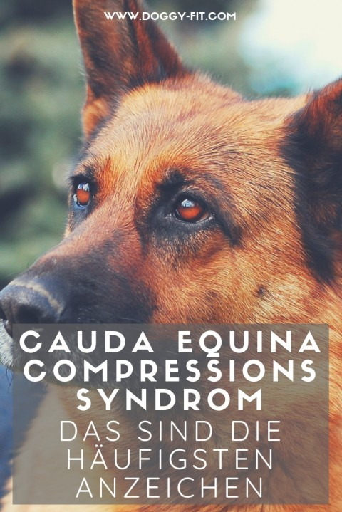 Die typischen Symptome des Cauda Equina Compressions Syndrom