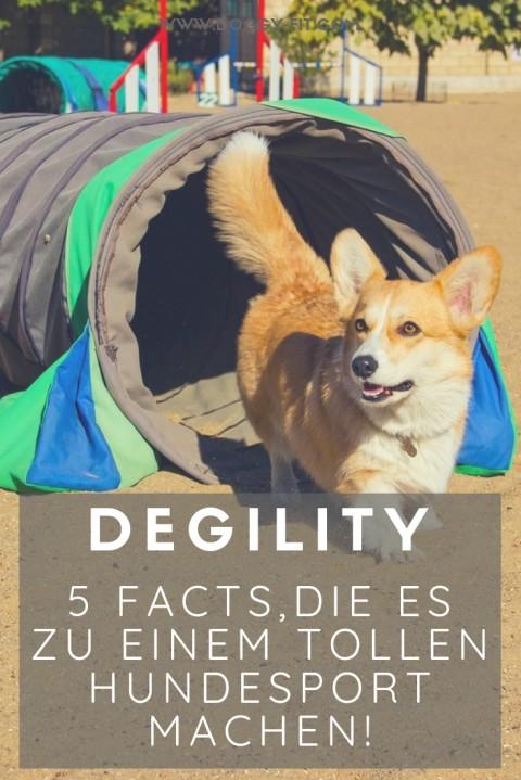 5 Facts, die Degility zu einem tollen Hundesport machen!