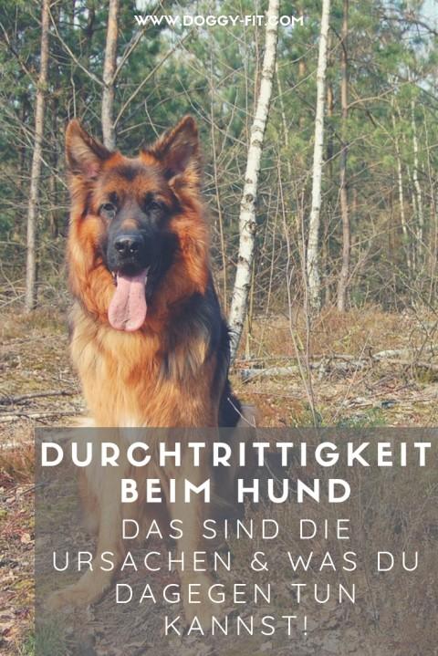 Durchtrittigkeit beim Hund – Ursachen, Folgen und Maßnahmen