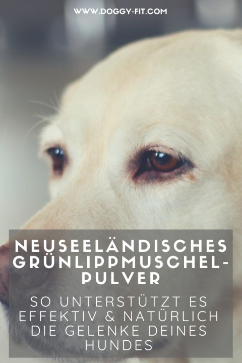 Neuseeländische Grünlippmuschel – Hilfe bei Arthrose, Hüftdysplasie & Co.