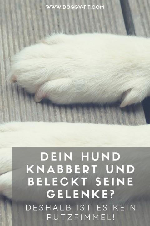 Dein Hund knabbert und leckt an seinen Gelenken? – Deshalb hat es nichts mit Körperpflege zu tun!