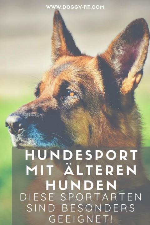 Hundesport mit älteren Hunden – geht das & was muss man beachten?