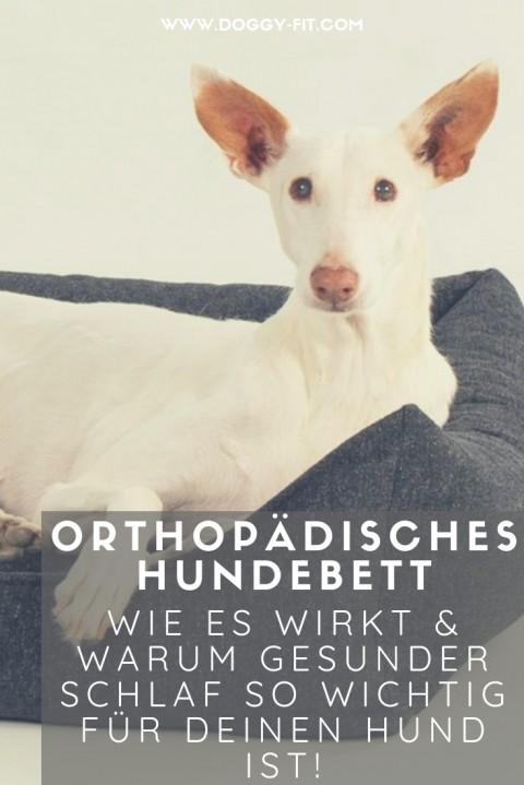 Orthopädisches Hundebett – wie es wirkt & warum gesunder Schlaf so wichtig für deinen Hund ist!
