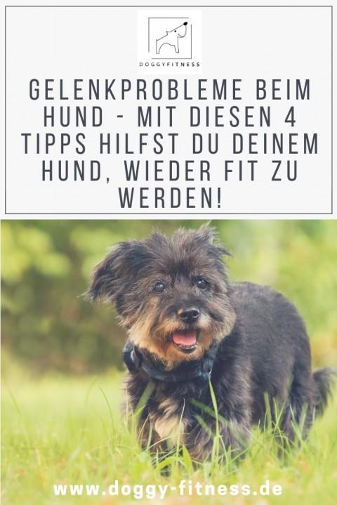 4 Tipps damit ein Hund mit Gelenkproblemen schnell wieder fit wird & was du vermeiden solltest!