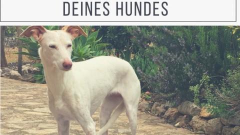 2 effektive Übungen, um die Koordination und das Körpergefühl deines Hundes zu stärken