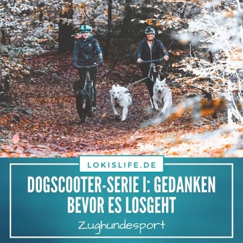 Dogscooter-Serie I: Bevor es mit dem Zughundesport losgehen kann