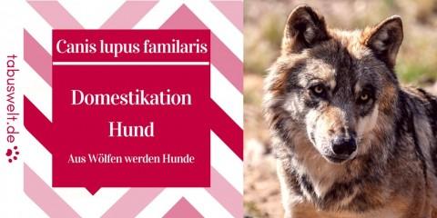 Domestikation Hund – Aus Wölfen werden Hunde