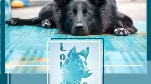 Hundetricks: Den Kopf auf dem Boden ablegen