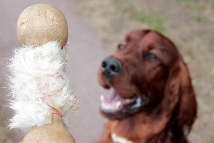 Dummytraining Dummy Hundesport