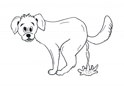 Durchfall beim Hund