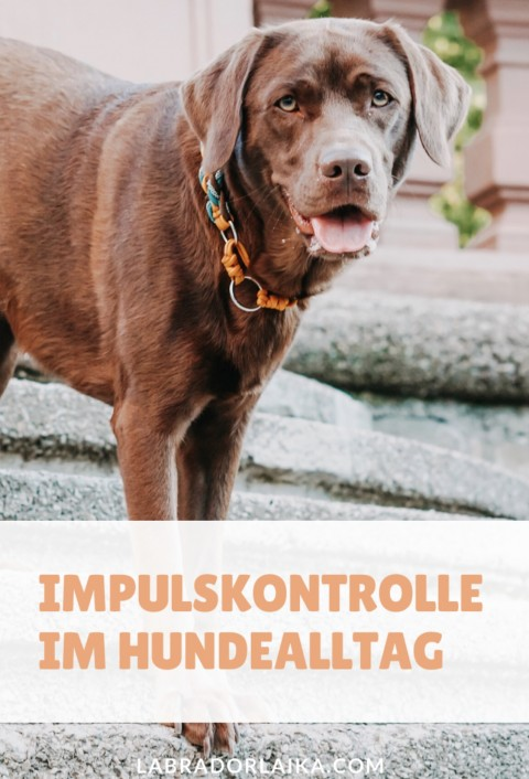 Impulskontrolle im Hundealltag