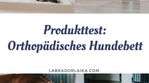 Produkttest Das Gelax Hundebett von DoggyBed Manufaktur im Test