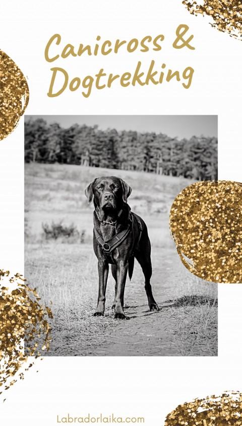 Zughundesport – Canicross und Dogtrekking