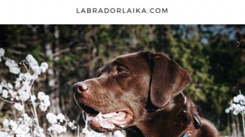 Agility für Hunde und warum es nicht das Richtige für uns ist