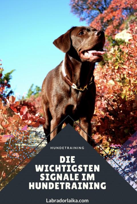 Die wichtigen Signale in der Hundeerziehung Welpen Hundetraining