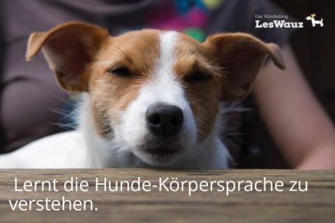Hundeverhalten deuten: Wie könnt ihr die Sprache der Hunde besser verstehen?