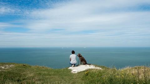 England mit Hund trotz Brexit?