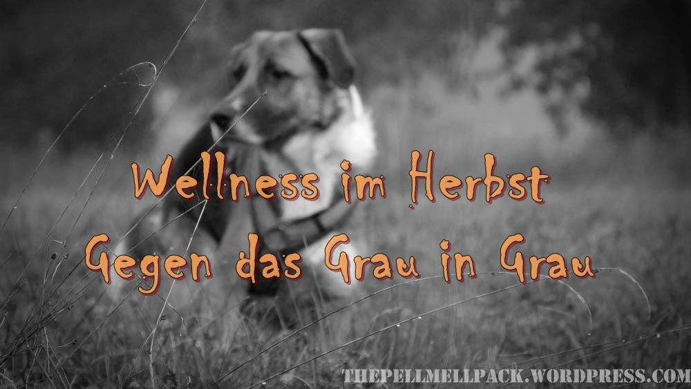 Wellness im Herbst für Hunde