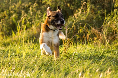 Wie findet man einen guten Hundesportverein?