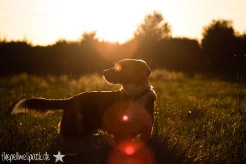 Wellness für deinen Hund im Herbst