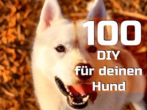 100 DIY für deinen Hund