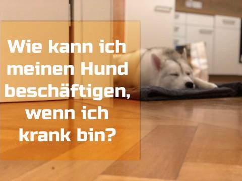 Wie kann ich meinen Hund beschäftigen, wenn ich krank bin?