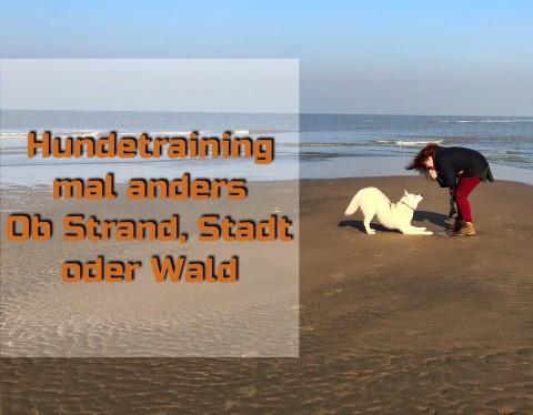 Hundetraining mal anders – Ob Strand, Stadt oder Wald