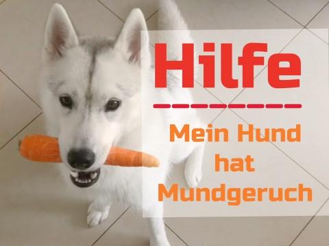 Hilfe mein Hund hat Mundgeruch *Werbung