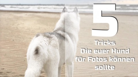 5 Tricks die euer Hund für Fotos können sollte