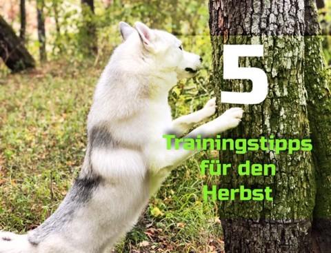 5 Trainingstipps für den Herbst