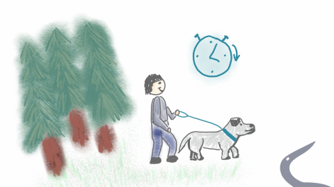 Entspannter Spaziergang mit Hund – Teil 4: Freilauf in Etappen