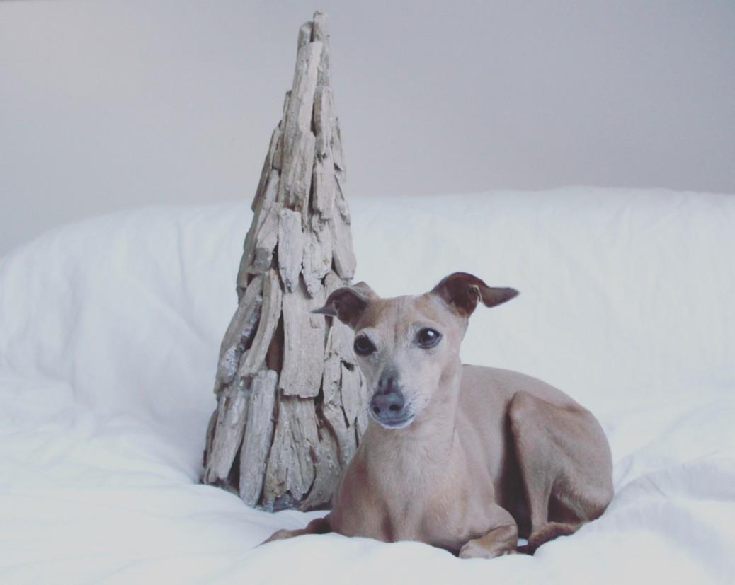 Entspanntes Weihnachten mit Hund