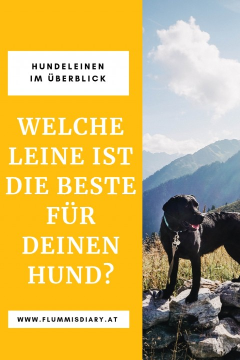 Hundeleinen im Überblick – Diese Leinen verwenden wir!