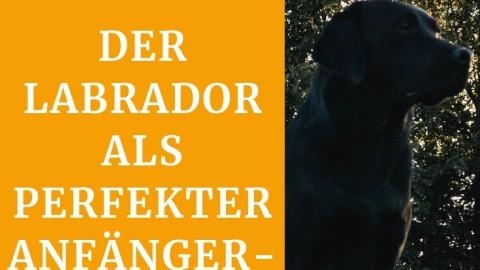 Warum einen Labrador? – inklusive Rasseporträt
