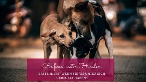 Erste Hilfe bei einer Beißerei unter Hunden