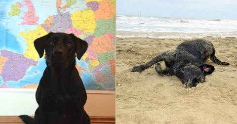 Europareise mit Hund und Campingbus – Vorbereitungen