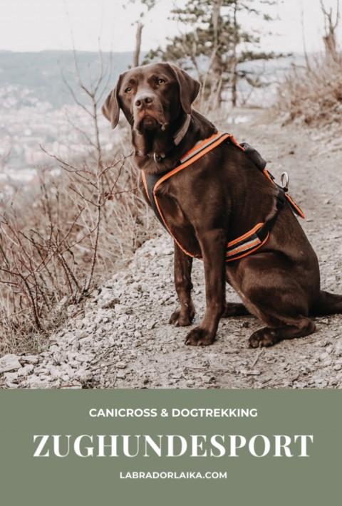 Canicross & Dogtrekking – Zughundesport