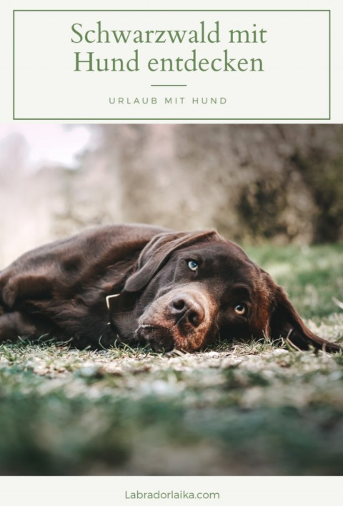 Urlaub mit Hund – Ausflugsziele im Schwarzwald