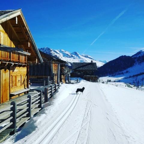 We love Wintercamping – Fabelhafter Winter-Ausklang im Defreggental/Osttirol