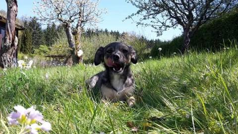 Hundeliebe – Wie findet man einen Hund, wenn man gar keinen Hund will?!?!