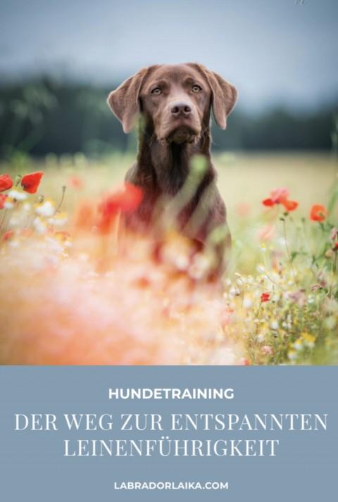 Unsere Tipps für eine entspannte Leinenführigkeit bei Hunden