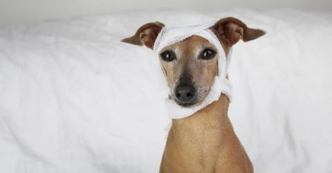 4 Gründe, warum du deinen Hund regelmäßig körperlich untersuchen solltest.